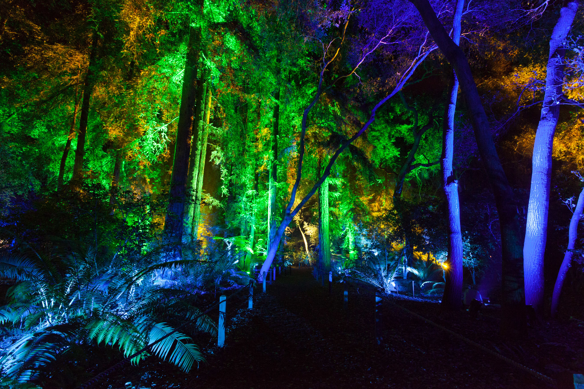 timeout - Enchanted Forest Of Light Descanso Gardens December 21